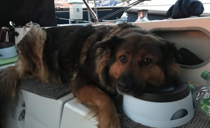 Hund an Bord mit Napf